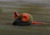 Vorschaubild Maus und Sackpfeife